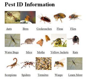 Maximum Pest Control