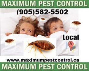 Bed Bugs Exterminators In Hamilton Ontario