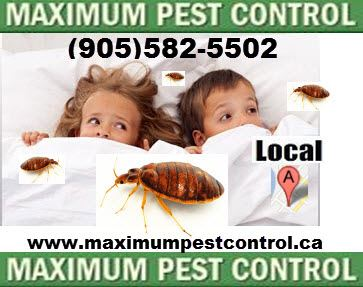 Bed Bugs Exterminators In Hamilton Ontario