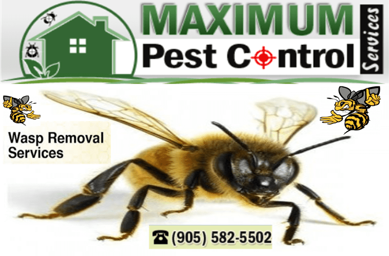 Wasp Removal Services Oakville Ontario