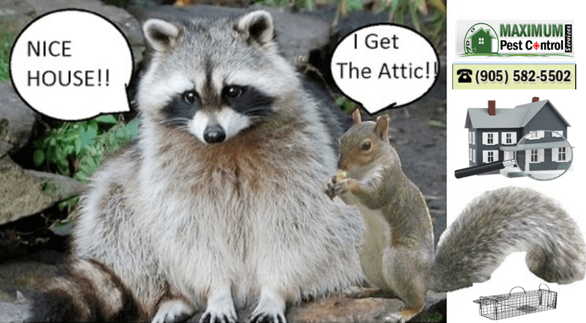 humane wildlife removal service