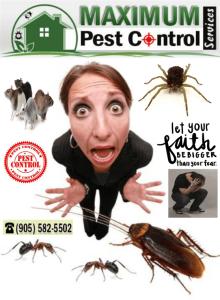 pest control service| Oakville, Hamilton ON