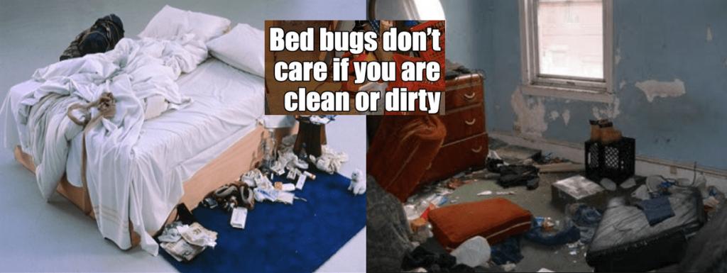 bedbugs pest control service