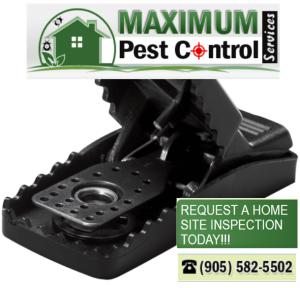 mice pest control www.maximumpestcontrol.ca 905 582 5502