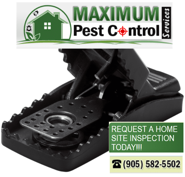mice pest control www.maximumpestcontrol.ca 905 582 5502