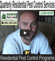 residential-pest-control-package (905) 582 5502
