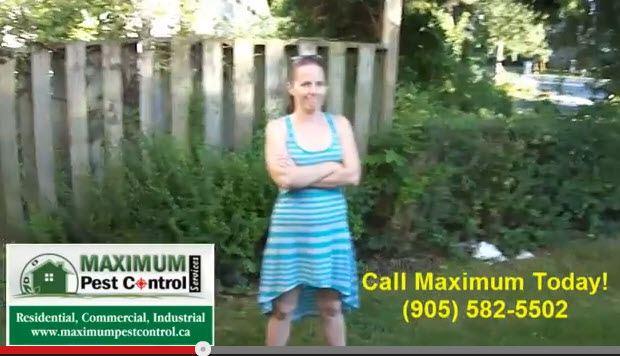 Pest control | Toronto, Brampton, Mississauga, Oakville, Burlington, Hamilton