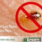 bed bug on human skin sucking human blood also features Maximum Pest Control Services brand logo and phone number