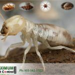 white color termite