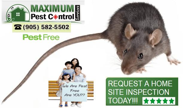 pest control service for rat