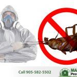 dead brown cockroach next to Maximum Pest Control Services pest technician wearing a mask