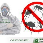 bugs and insects and professional pest control technician