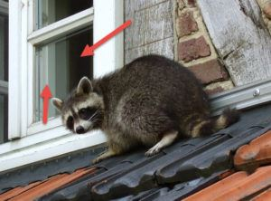 Wildlife Removal Services 905-582-5502