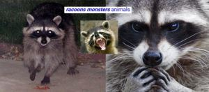 Oakville racoons monsters animals