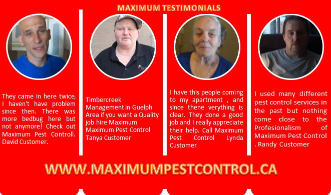 testimonials from customers of Maximum Pest Control Services