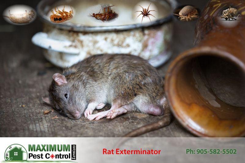 dead rat on the floor next to kitchen jars