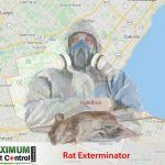 map of Ontario Hamilton and dead rat lying down next to rat exterminator