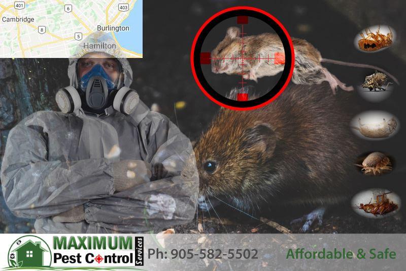 pest control Hamilton Ontario