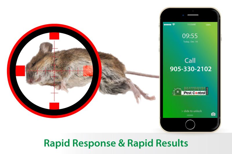 dead mouse behind sniper target and mobile phone illustration