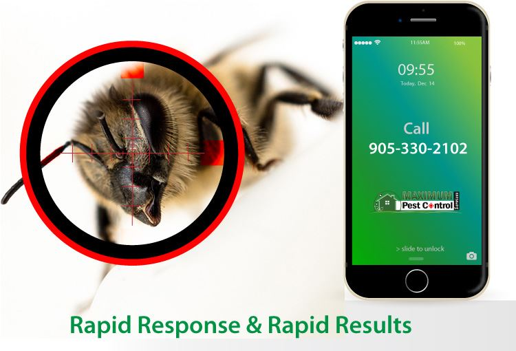 wasp behind sniper target and mobile phone illustration