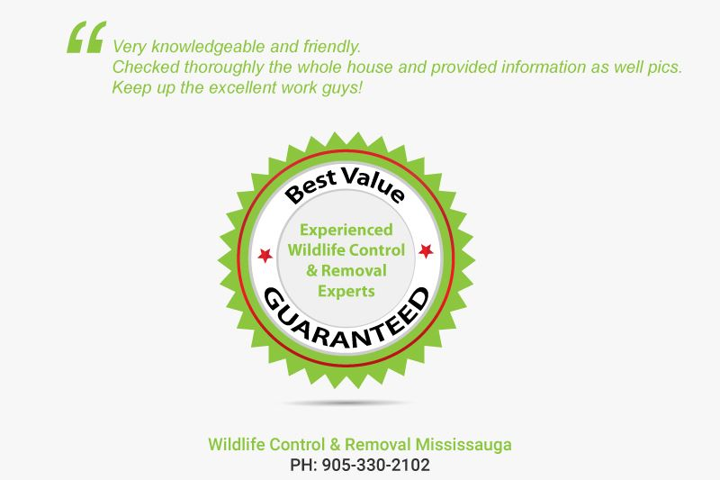 Wildlife Control & Removal Mississauga