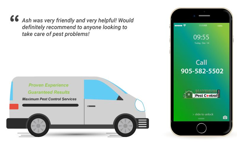 phone us for residential pest control solutions