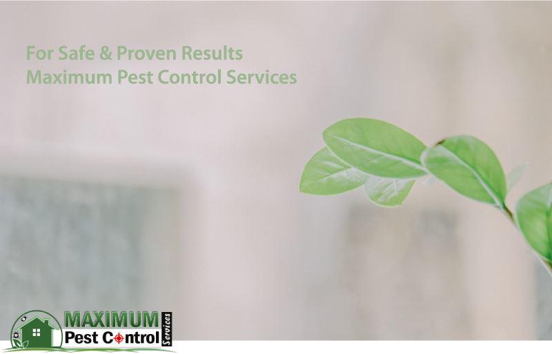 environmentally safe pest control