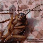 dead cockroach on tile floor