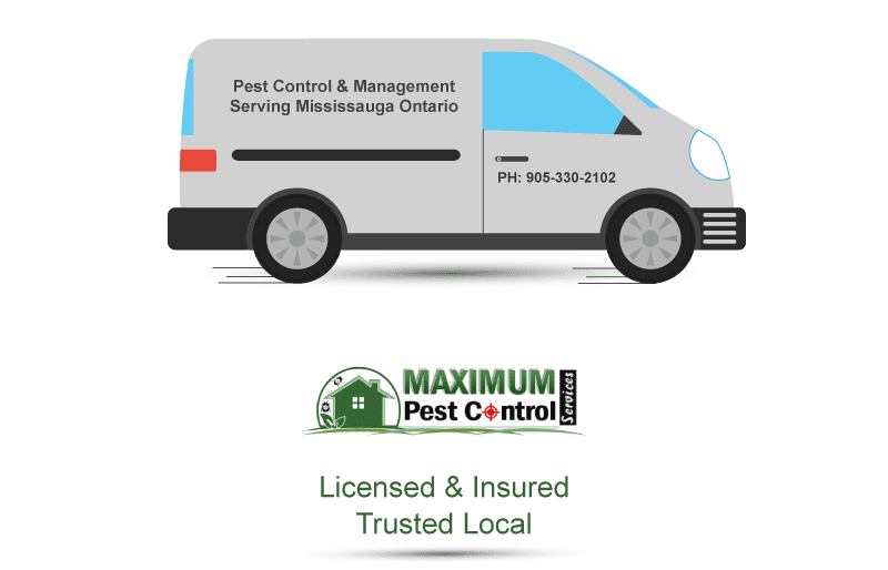 licensed and insured pest control and management serving Mississauga Ontario