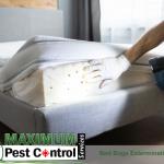 bed bugs infestation on mattress