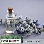 essential plant oil in a small bottle